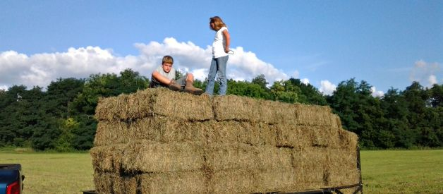 ALL ABOUT HAY – Stocking the Barn without Breaking the Bank