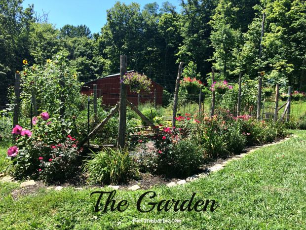 july garden 5