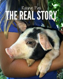Raising Pigs – The Real Story