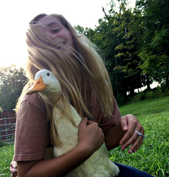 duck coop 4