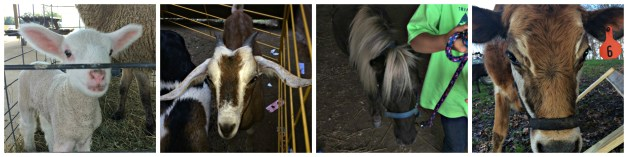 ag day Collage 2