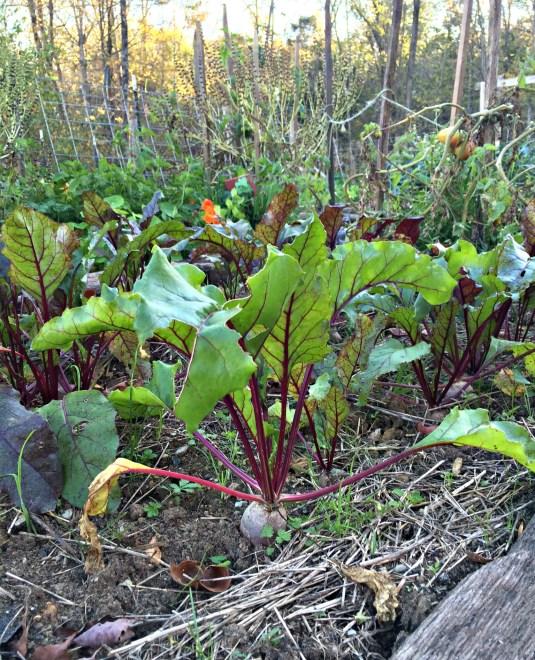 fall garden 7