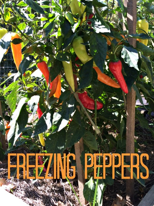 freeze peppers