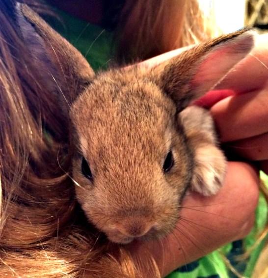 wabbit 4