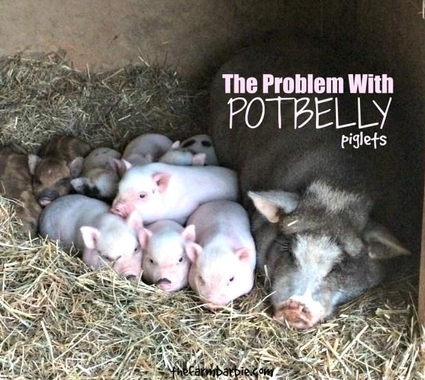 piglets free 7