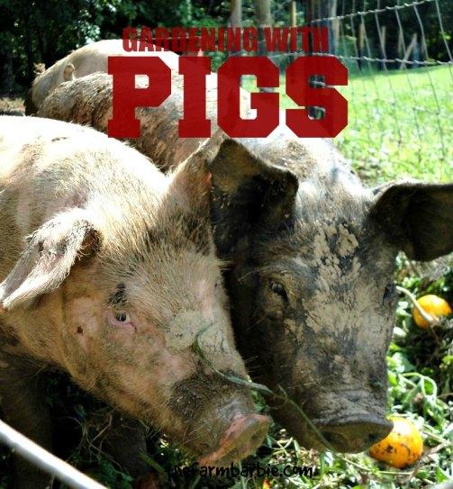 pigpasture 11