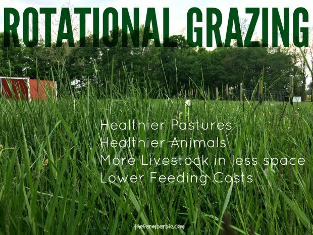 rotational grazing feature