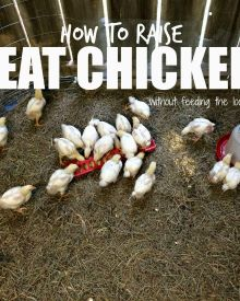 How to Raise Chicken Meat that is Not:  Stringy, Chewy, or Tough