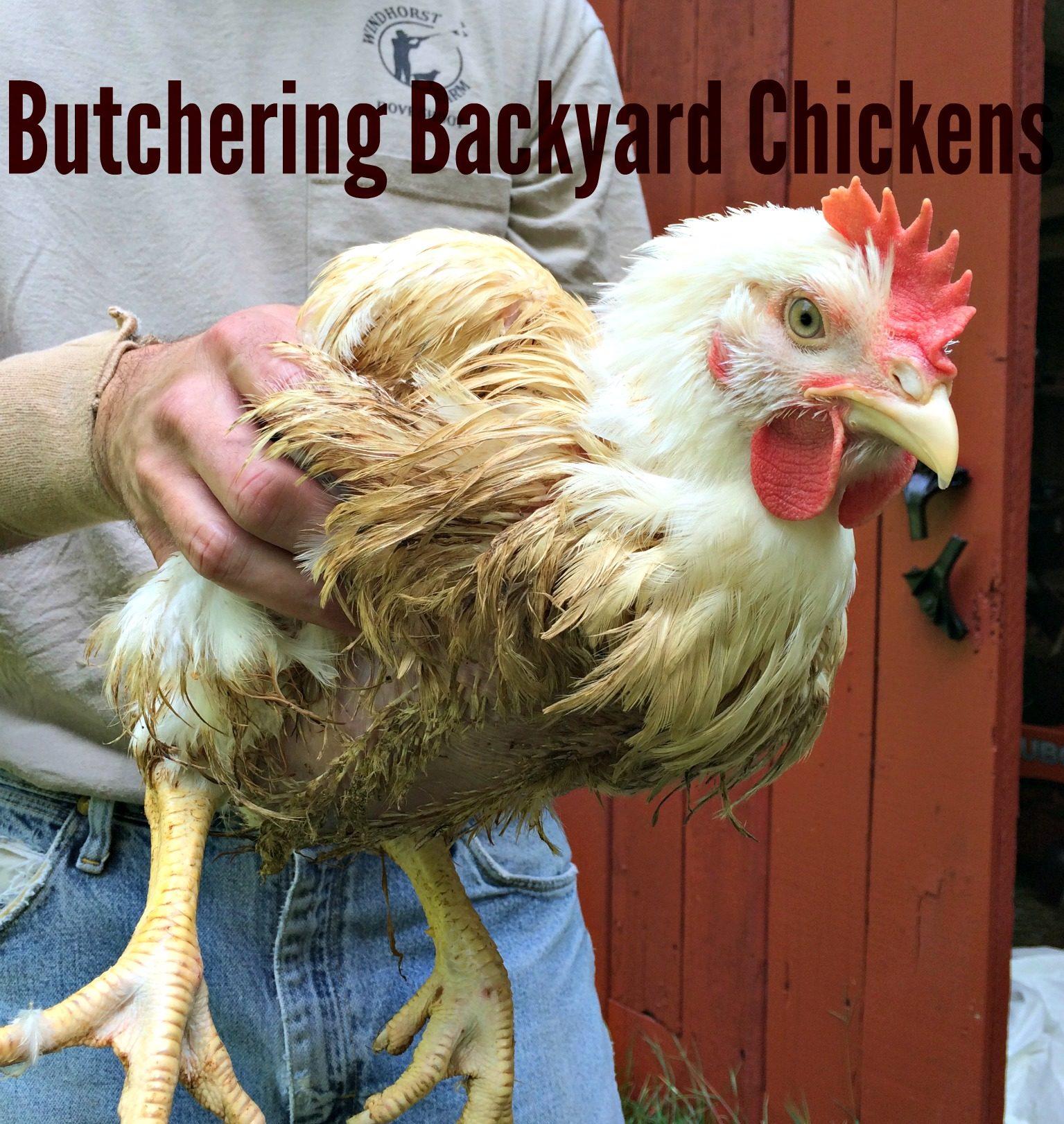 butchering backyard chickens u2013 farm fresh for life u2013 real food for
