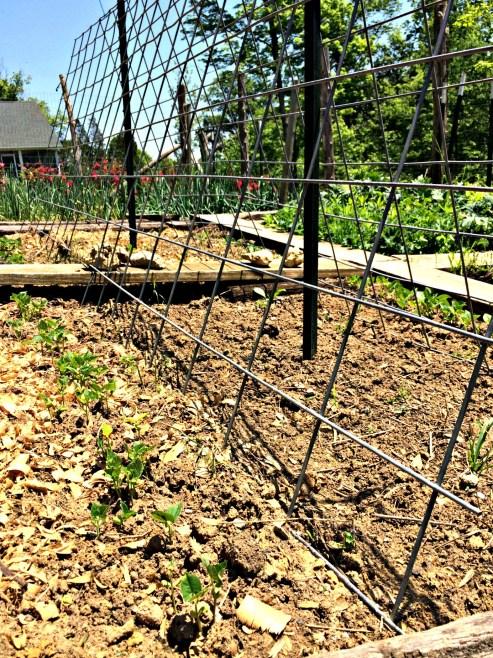 may garden 5
