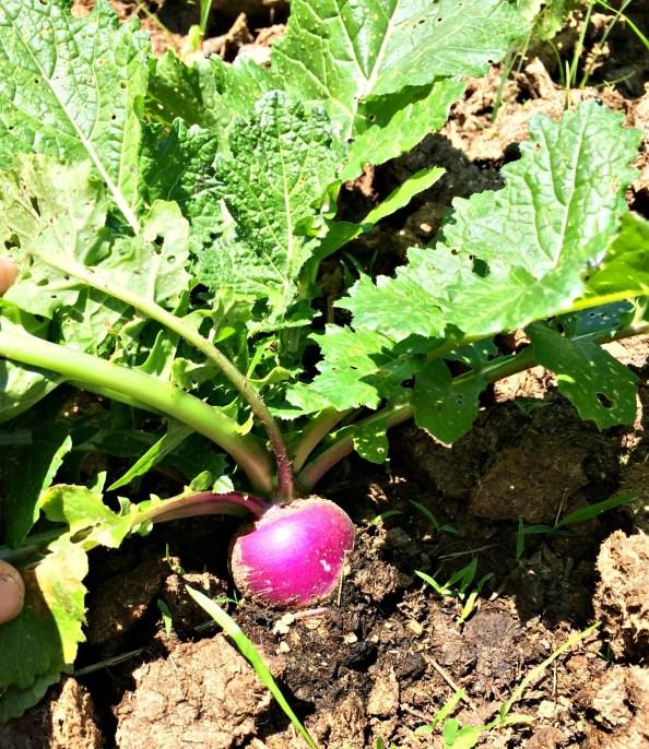 may garden 7