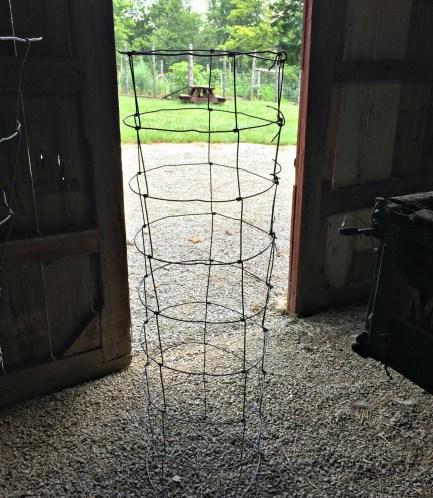 tomato cage 4