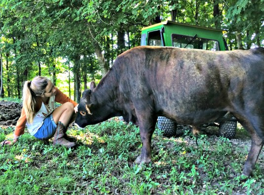 train a cow 7