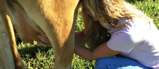 What Causes Mastitis?