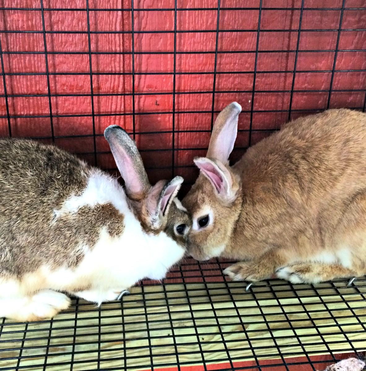 Build a Backyard Rabbit Hutch - Farm Fresh For Life - Real ...