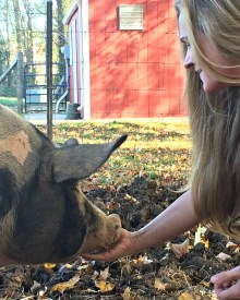 When It's Time to Go To Market – Eating Your Porker