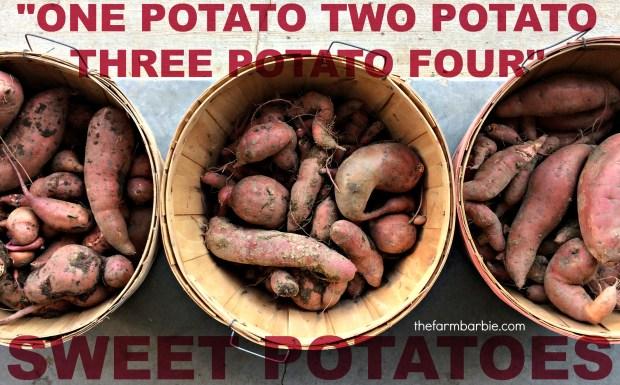 sweet-potatoes-7-1