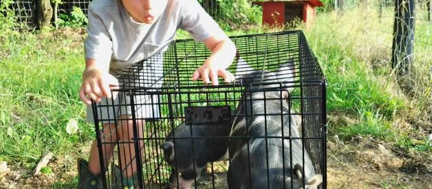 How to Keep Kids Safe Around Livestock
