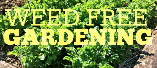 No More Weeds!!! Here\'s my Secret to Weed-free Gardening – Farm ...
