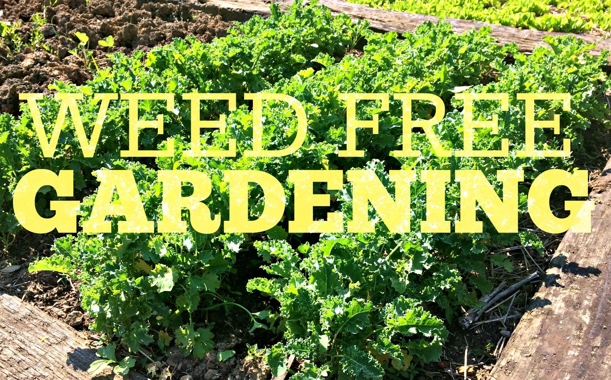 Hereu0027s My Secret To Weed Free Gardening