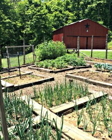 Diets Don't Work – This Does – How to Start Eating Farm Fresh This Week