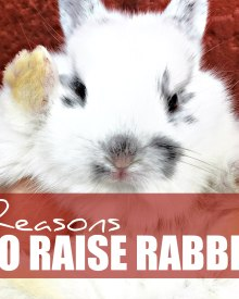 7 Reasons to Raise Rabbits