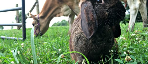 A Peek Behind the Scenes (July '18) – Free-Range Rabbit (Premium)