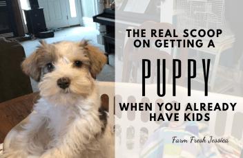 getting a puppy FB size
