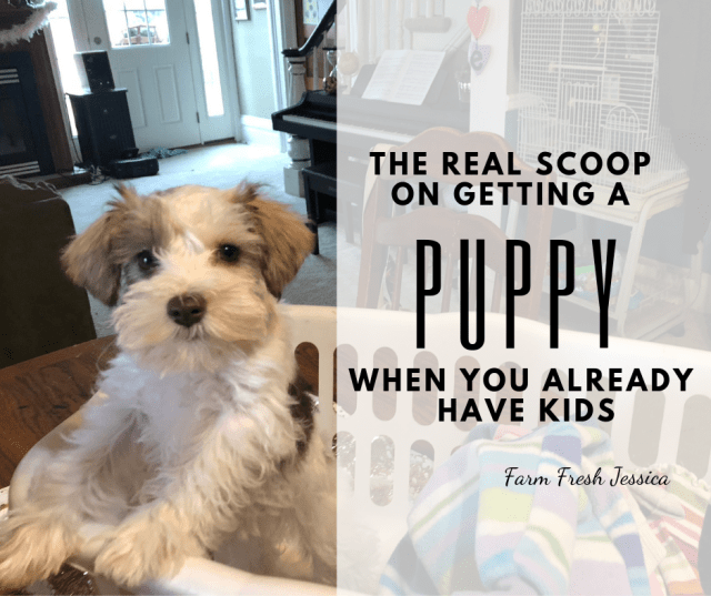 getting a puppy guide with family kids