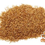 Chubby-Mealworms-High-Quality-Bulk-Dried-Mealworms-for-Wild-Birds-Chickens-etc-0-0