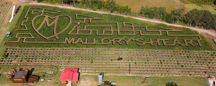 Mallory's Heart