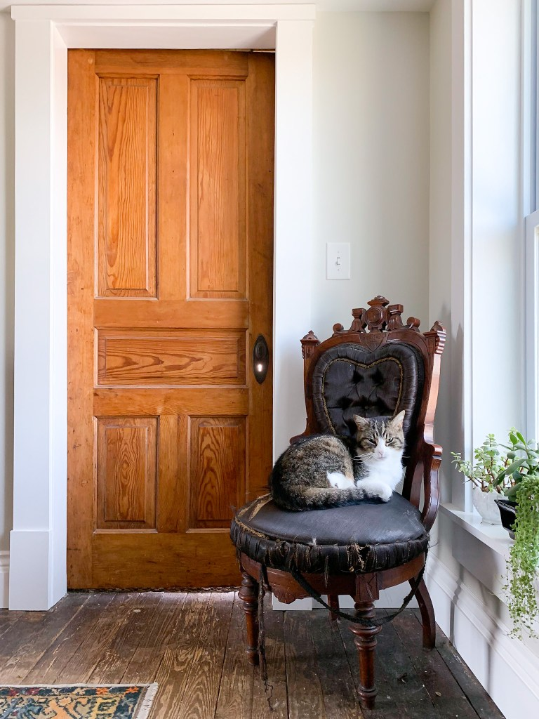 cat on a chair with door