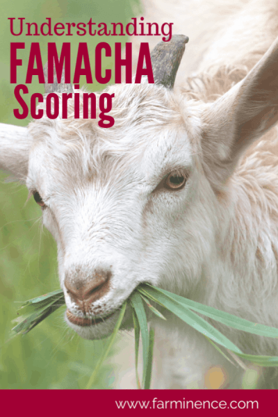 FAMACHA scoring
