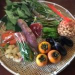 野菜パックでサツマイモの茎の胡麻和え