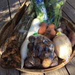 今年最後の野菜パックを発送しました。