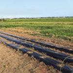 【種付け体験】耕作放棄地の一角が空豆の畑になりました