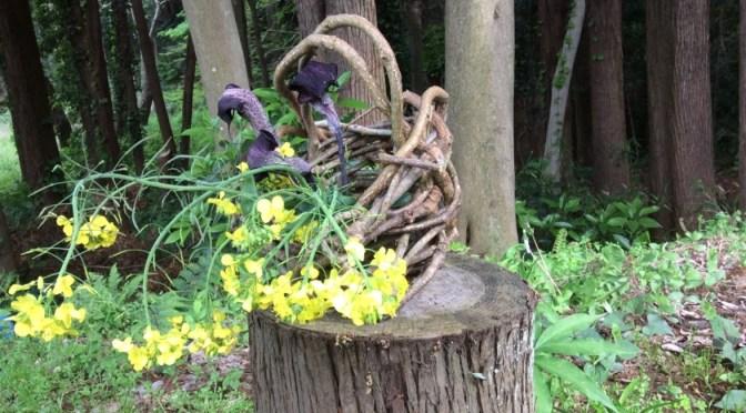 【11月3日】旬菜里の畑でアケビの籠を編もう♪ー&さつまいも掘り、空豆苗植えー