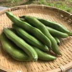 【豆・豆体験】空豆の収穫&落花生の種蒔き