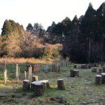 【桜絆プロジェクト】台風にも負けず、3年目も芽を出してくれました