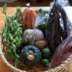 野菜パックを発送しました(8月23日)