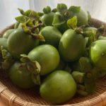 柿渋にチャレンジ