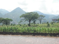 Flood recession farming, Marakwet