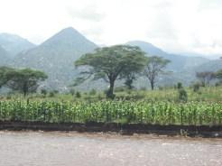 Flood recession farming, Marakwet