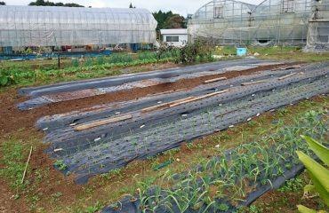 自家農園で無農薬野菜づくり