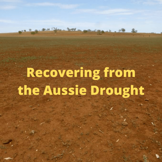 recovering from drought