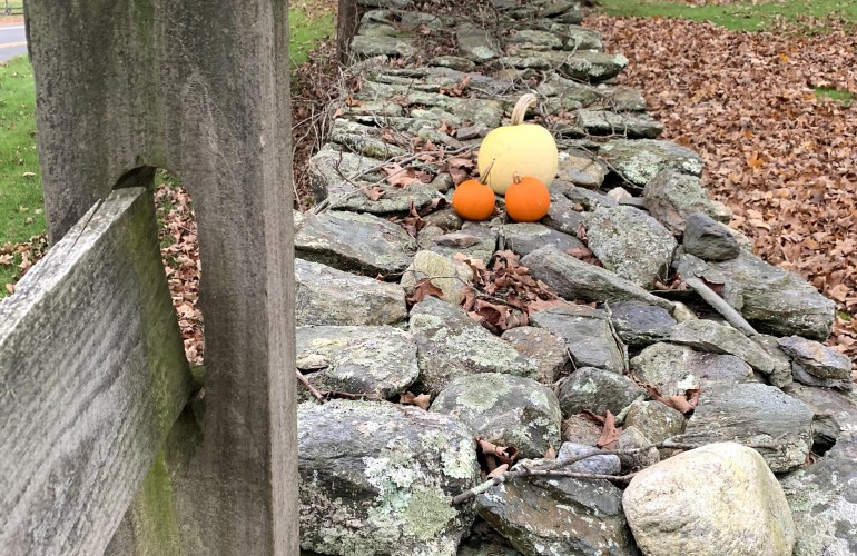 White and orange pumpkins on an old New England stone wall