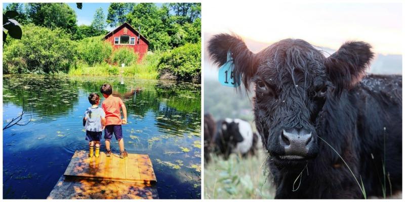 reek Farmstead, Walton, Nova Iorque |  Farm Stay EUA
