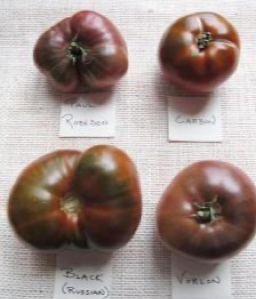 Four popular black varieties of heirloom tomatoes