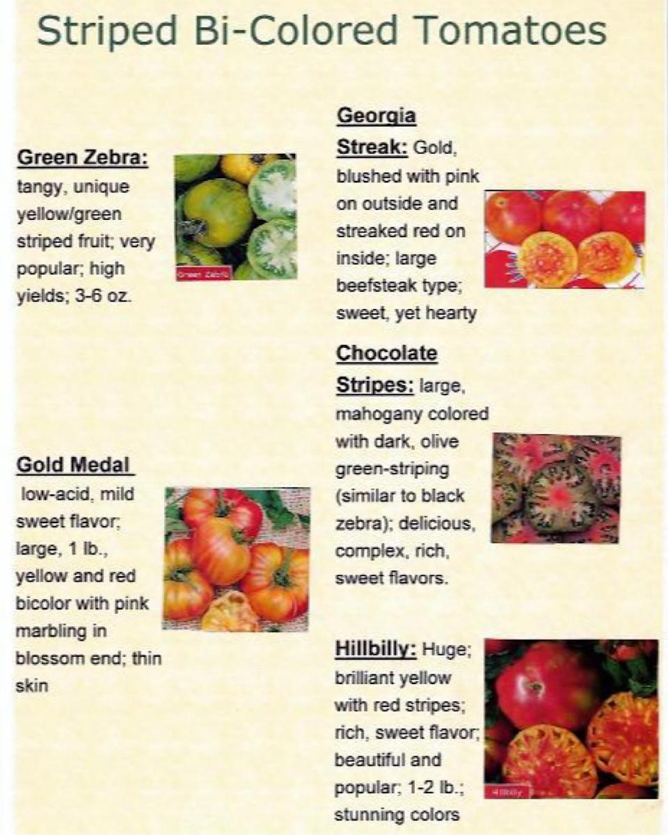 Description of popular striped heirloom varieties