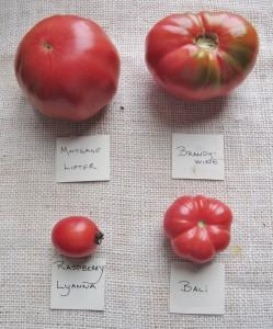A variety of pink heirloom tomatoes and a description of their flavor profile